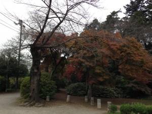 清水公園 (2)